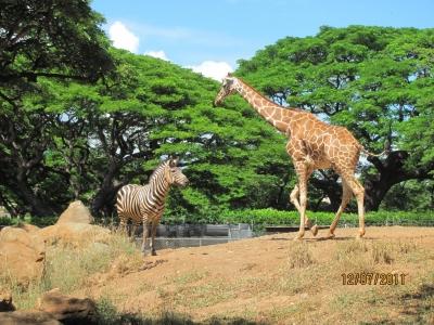 в зоопарке Гонолулу