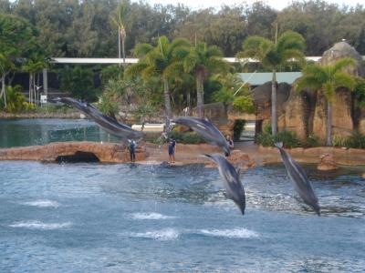 шоу дельфинов в Водном мире