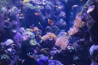 Океанариум в Long Beach