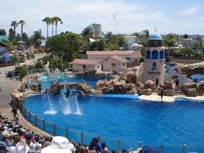 шоу дельфинов в Водном мире, Сан Диего