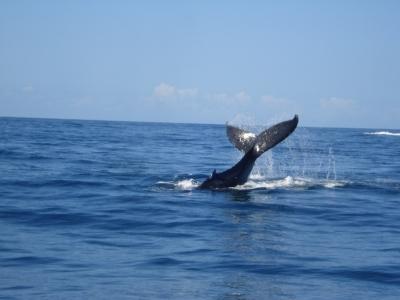 Миграция китов вдоль восточного побережья Австралии привлекает туристов со всего мира с июля по ноябрь